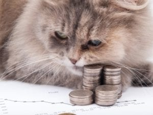 Cat and chart with heap of coins on white